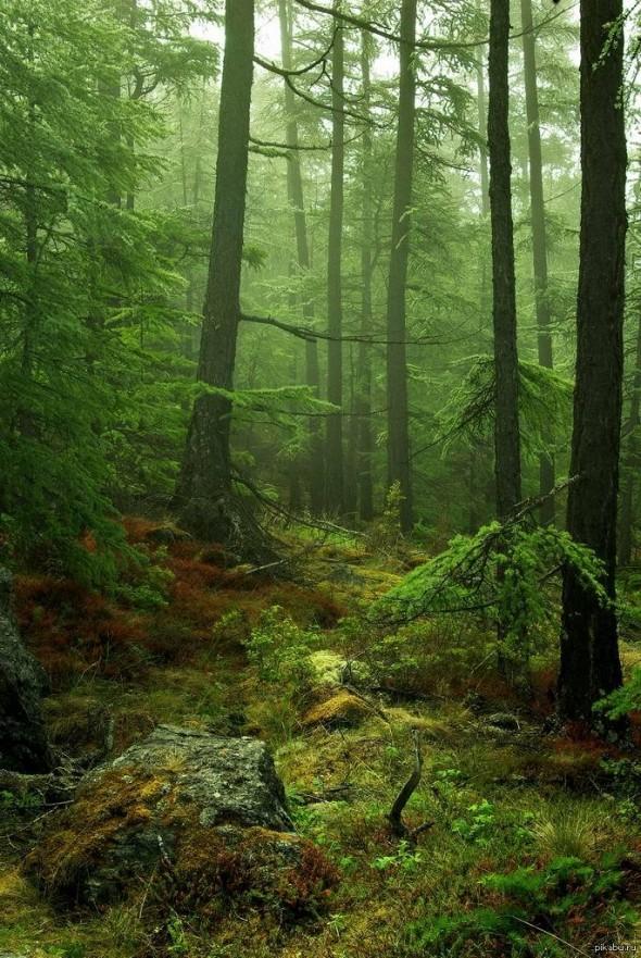 «В лесах» Мельникова-Печерского