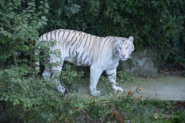 18 августа Ялта Зоопарк