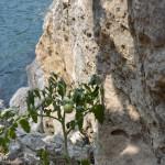 Помидорка на скале у моря впечатляет