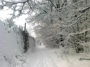 И вперед и назад белый снег