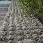 Кладбище ракушек
