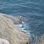 Три волны водили здесь хороводы